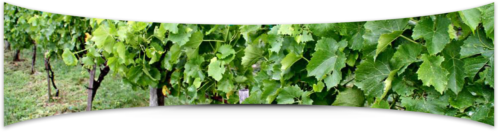 Banner Elk Winery & Villa Winery Photo Gallery